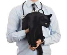 Veterinarian holds a black cat for examination - stock photo