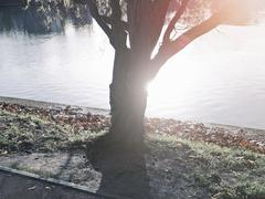 Tree growing on riverbank - stock photo