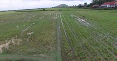 Aerial countryside rice paddies Stock Footage