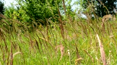 Wind bends long grass in the forest - close up Stock Footage