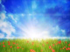Sunny Grass Field Stock Illustration