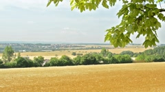 View of the large gold field in the countryside - trees in the distance - town  Stock Footage