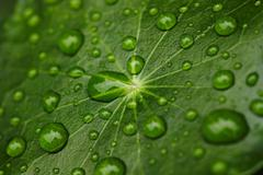 Close up of water droplets on leaf Stock Photos