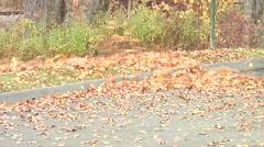 Leaves blowing via leaf blower Stock Footage