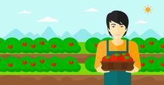 Stock Illustration of Farmer collecting tomatos