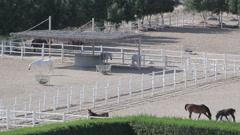 arabian horse runs inside paddock in the dust desert, UAE - stock footage