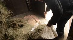 Older Man Picks up Burlap of Hay From Floor of Barn Stock Footage