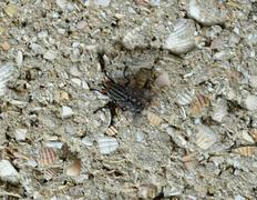 Big fly with white stripes sitting on a block wall Stock Photos