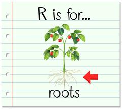 Flashcard letter R is for roots - stock illustration