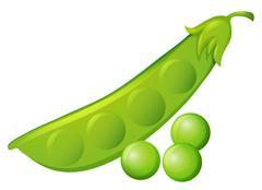 Fresh peas and peapod Stock Illustration