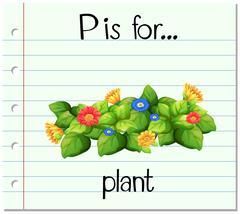 Flashcard alphabet P is flor plant Stock Illustration