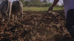 Man Farmer Cultivating Land Plowing The Soil With Ox Stock Footage