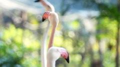 Flamingo turning around in park Stock Footage