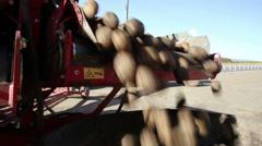 Potato tubers on a conveyor Stock Footage