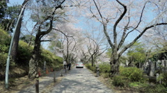 Cherry blossoms blooming along the beautiful alley of Aoyama Cemetery. Stock Footage