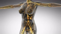 Science anatomy of human body in x-ray with glow blood vessels Stock Footage