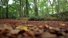 Belgrad Ground Stable Shot 2 Stock Footage