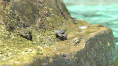 Crabs bask in the sun on a tropical beach. Slow motion. Stock Footage
