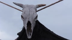 Attribute shaman - bull skull Stock Footage