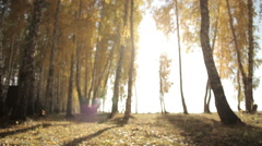 Autumn mushrooms in the forest Stock Footage