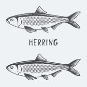 Herring vector illustration Stock Illustration