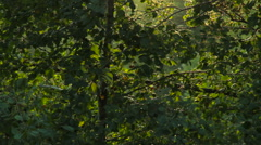 Insects fly in a forest. Bokeh at sunset. Background Loops - stock footage