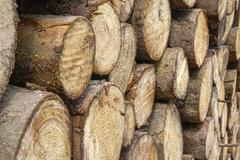 Stock Photo of stacked tree trunks