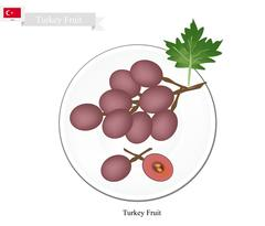 Stock Illustration of Ripe Grape, A Popular Fruit in Turkey