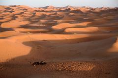 Camels at the dunes, Morocco, Sahara Desert - stock photo