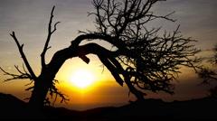 Sunrise Behind Tree Time-lapse 4K - stock footage