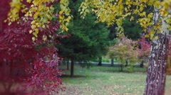 Autumn park with yellow birches, dry herb and some red tree. 1920x1080 Stock Footage