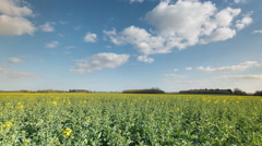 Stock Video Footage of Rape Seed Field Time Lapse