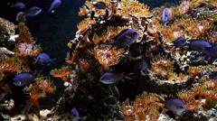 Exotic Deep See Fish In Aquarium Stock Footage