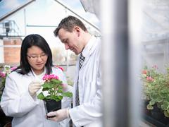 Student and teacher observing flowers in school greenhouse laboratory Stock Photos