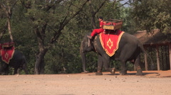 elephant with its mahout - stock footage