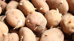 Prepared for planting potato. Stock Footage