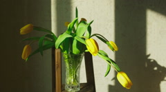 Faded yellow tulip buds raised - stock footage