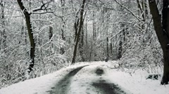 Tops of the snowy trees and path in woods Stock Footage