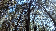 Stock Video Footage of 360 degree treetops with sun flare from forest
