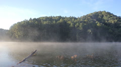Fog on the water in morning at Pang-ung, Pine forest in Mae Hong Son,Thailand - stock footage