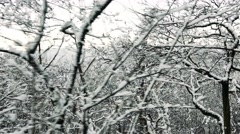 Branches of trees with blanket of snow Stock Footage
