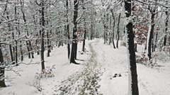 Stock Video Footage of Snowy footpath in forest with snowy trees