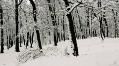 Snowy trees in wintertime forest Stock Footage
