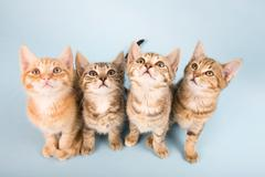 Four cats looking up - stock photo