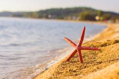 Starfish on the sandy beach, Summer travel, tourist destination Stock Photos