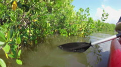 CLOSE UP: Paddling in canoe on calm mangrove river canal - stock footage