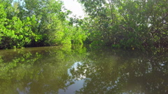Kayaking in lush mangrove trees river canals jungle - stock footage