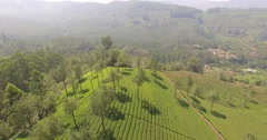 Aerial close up of trees in a tea plantation in Munnar, India Stock Footage