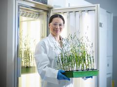 Portrait of scientist holding plant cultures grown in incubator in biolab - stock photo