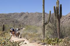 Horse tour, guided horseback riding the desert with Saguaro Cacti in Spring Stock Photos